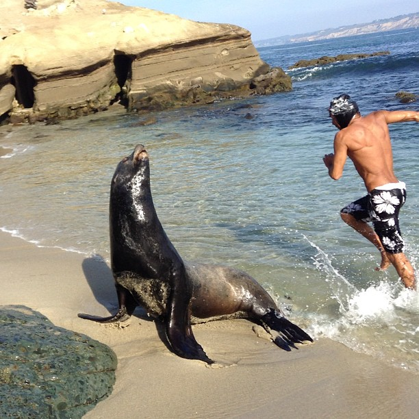 Guy jumps by seal