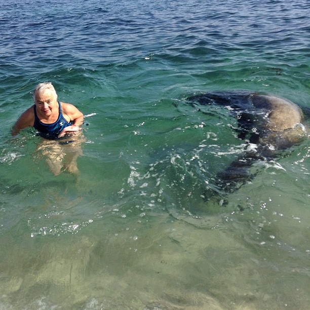 Seal swims near old lady